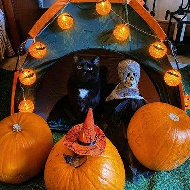 black cat poses with Halloween decor