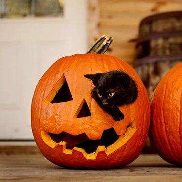 black cat crawls out of pumpkin