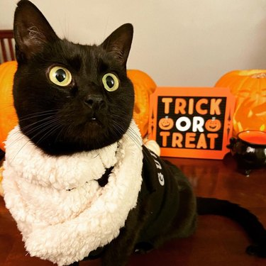 black cat poses with trick or treat sign