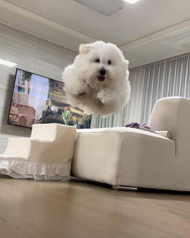 white dog in a living room, looks like a cloud flying through sky
