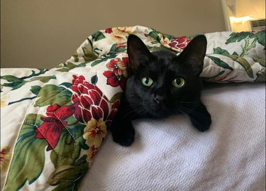 black cat laying underneath a blanket on a bed