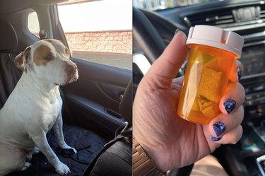drive thru pharmacy gives dog dogbone in prescription jar