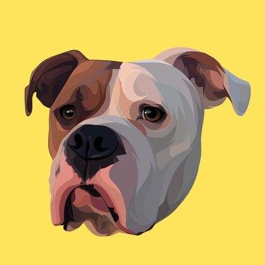 custom cartoon dog vector