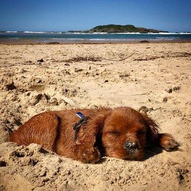 Puppy sleeping on sandy beach