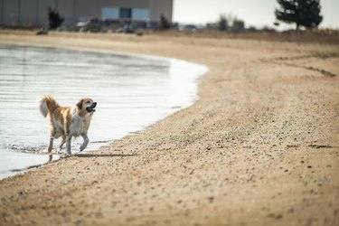 Dog walking out of water onto beach