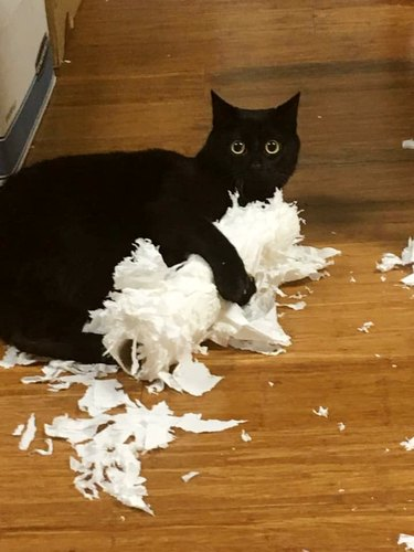 cat tears up toilet paper