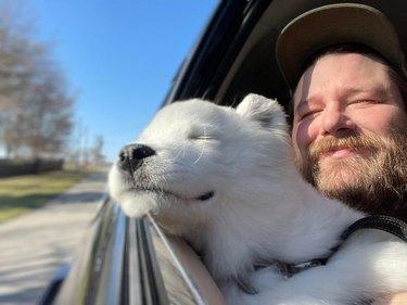 dog sticks head out of car window