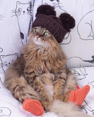 cat wearing orange socks