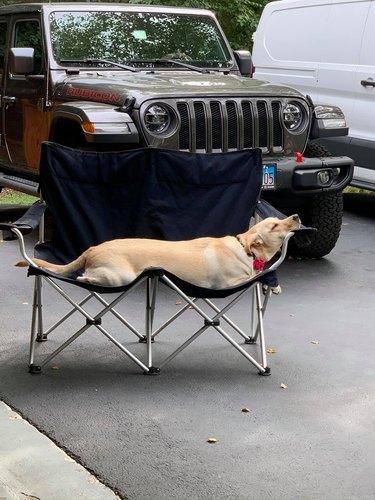 dog sleeps in funny position
