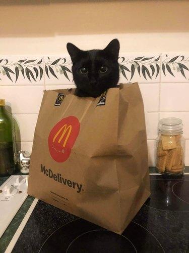 black cat sticks head out of McDonalds bag