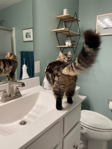 Rear view of cat standing on bathroom counter looking over its shoulder