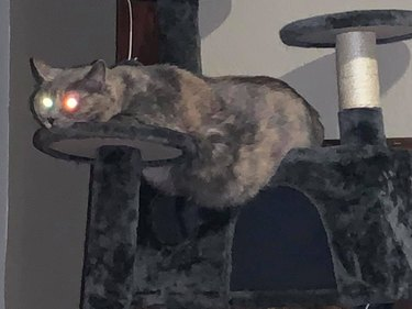 fat cat with lazer eyes