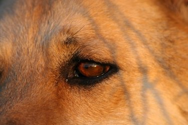 Finding a tick on your dog's eyelid.