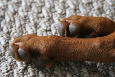 dog feet