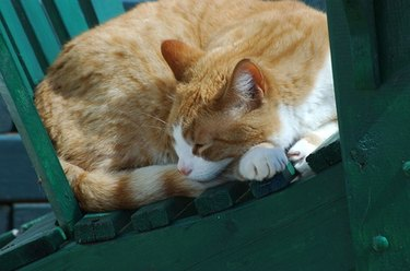 Close up of an orange cat sleeping on a green couch