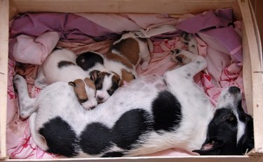 female and her puppies