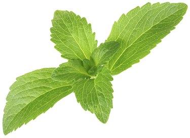 """Stevia Rebaudiana, Sugar Substitute Cutout"""