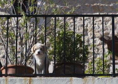 Cute curious dog on balcony