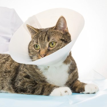 veterinarian treatment