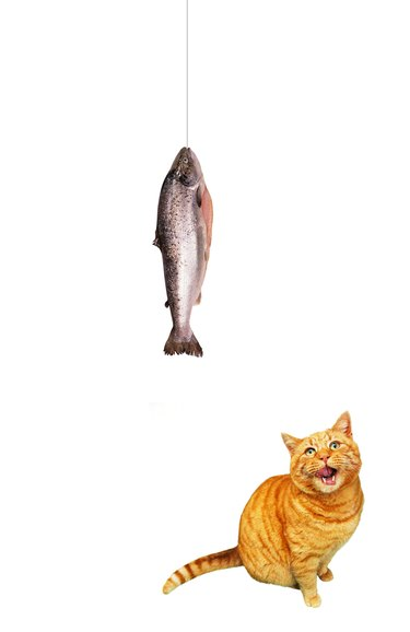 Cat looking up at fish on line (digital composite)