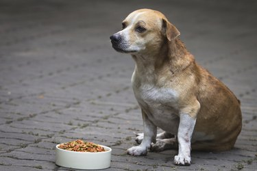 Dogs and dogs food