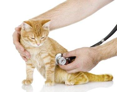 Veterinarian hand examining a cat
