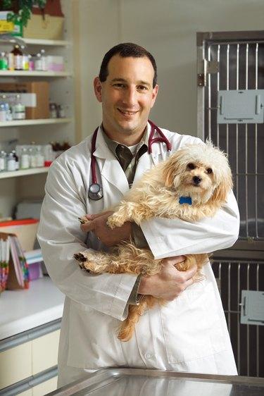Vet holding dog in clinic