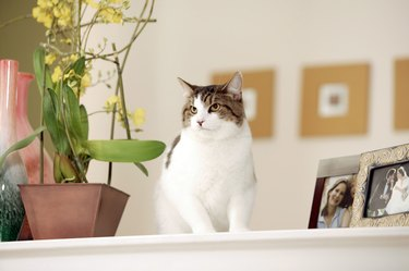 Cat sitting near flowers and picture frames