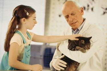 Veterinarian holding girl's cat