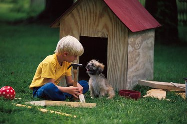 Boy building a dog house for puppy