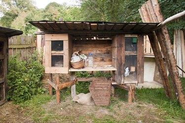 Rabbit in the hutch