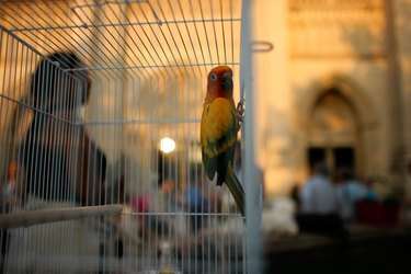 National Cathedral Celebrates Annual Blessing Of The Animals