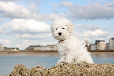 Puppy on the rocks