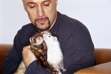 Man with ferrets