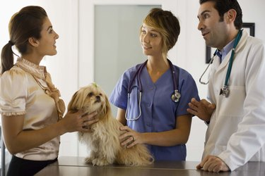 Veterinarians with a dog