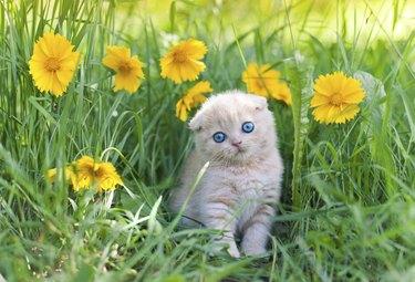 Cute little kitten sitting in flower meadow