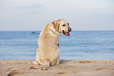 Dog and sea