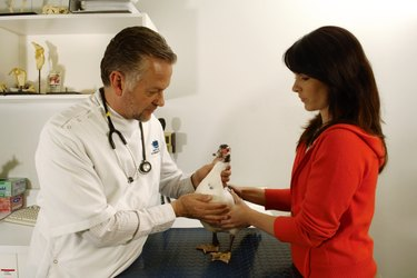 Mature male vet examining duck with female owner in surgery