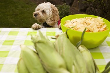 dog at picnic table