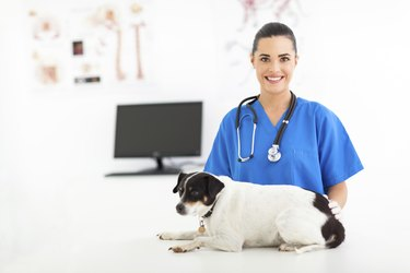 female veterinary assistant caring for pet dog