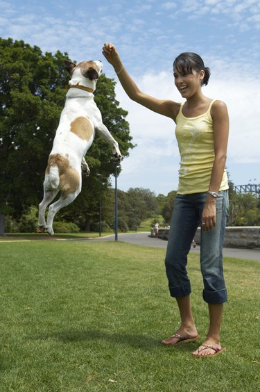 Young woman playing with jack russell terrier in park