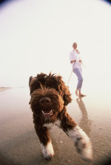 Young woman taking her dog for a walk on the beach