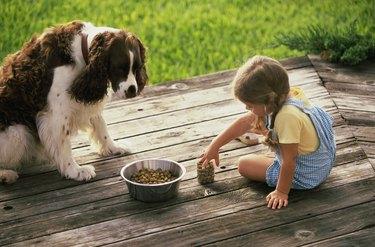 High angle view of a girl feeding her dog