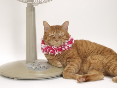 Cat with garland resting by electric fan, white background