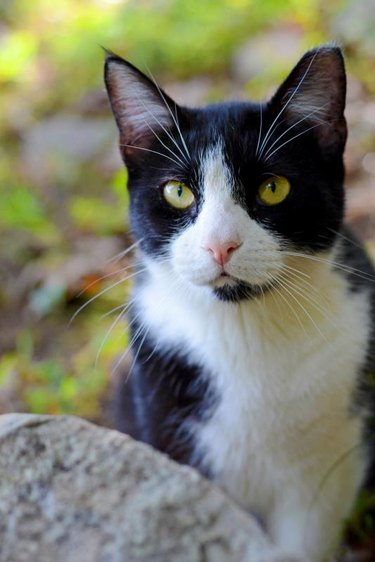 Black and White Cat in Green Forest