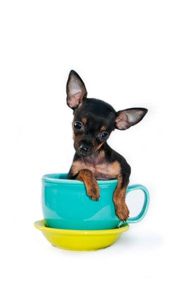 Puppy In a Mug