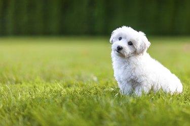 Puppy in a gras