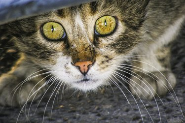 Scared and apalled cat under the car