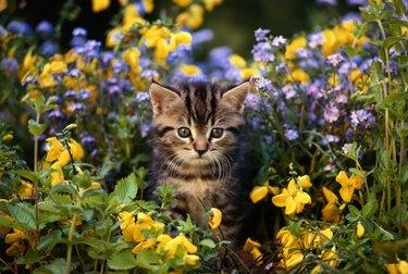 Cat sitting in flower garden, close-up