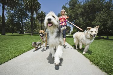 Woman walking several dogs